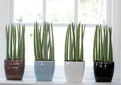 Mais de vinte espécies de plantas de baixa manutenção para plantar em apartamentos e áreas pequenas.