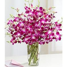 Dendrobium Orchids. Reminds me of our honeymoon in Jamiaca. They grew wild all around the island.