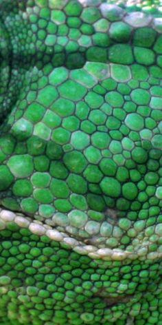 Green | Grün | Verde | Grøn | Groen | 緑 | Emerald | Colour | Texture | Style | Form | Pattern |  lizard skin