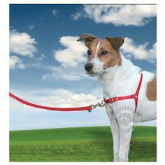 Easy Walk Harness - Small - Red Walking, Pet Products, Pets, Animals, Animales, Animaux, Walks, Animal, Animais