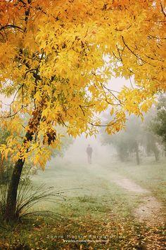 Magia a un par de clics: Cómo editar una fotografía de otoño   ¿A qué saben las nubes? Photography