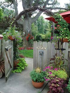 primrosegarden