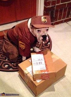 UPS Delivery Man Dog Costume - Halloween Costume Contest via @costume_works