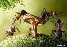 как избавиться от муравьев (700x490, 235Kb)