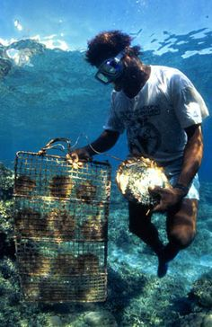 Planting mangroves, Western Province, Solomon Islands. Photo by Mike McCoy, 2001 by The WorldFish Center, via Flickr