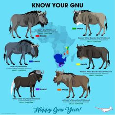The gnu's news Especie Animal, Animal Facts, Zoo Animals, Animals And Pets, Cute Animals, Animals Information, Fun Facts About Animals, Interesting Animals, Animal Species