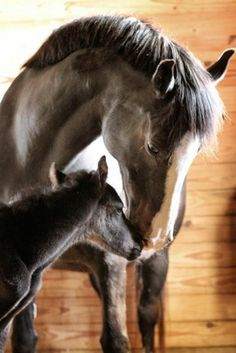 The Magic of Mother's Love!