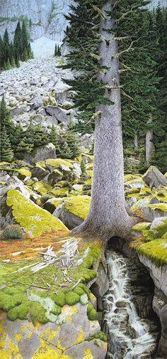 World Tree — Rob Schouten ~ This watercolor painting depicts the World Tree, rising majestically in a mountain landscape.  The tree represents the process of life, growing ever so slowly into maturity.  From the smallest lichens on the rocks to the tallest trees life wants to rise up, defy gravity.  The water that breaks the rock down into soil streams down.    The yin/yang, up/ down energy of these interconnected processes is reflected in the composition of the painting.