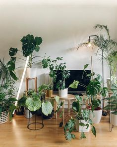 lots of houseplants home decor indoor jungle Room With Plants, House Plants Decor, Indoor Garden, Indoor Plants, Home And Garden, Nature Living, Plant Aesthetic, Deco Boheme, Plants Are Friends