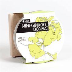 Mini-Gingko bonsaï