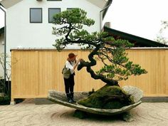 Bonsai man