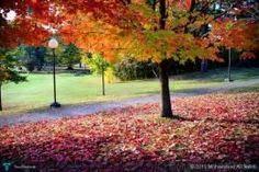 Fall foliage #Creative #Art #Photography @touchtalent.com