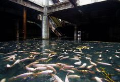 Abandoned shopping mall in Bangkok, taken over by large schools of fish....