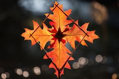 Red Oak Leaf Fire Star by Richard Shilling. He makes these little creations out of natural materials and then leaves them for people to find. They're beautiful and that sounds fun! I wanna do something like this.