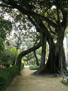 Jardim Botânico de Lisboa Places To Visit, Garden, Plants, Spaces, Beautiful, Lisbon, Park, Old Trees, Trees