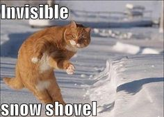 Everybody shoveling