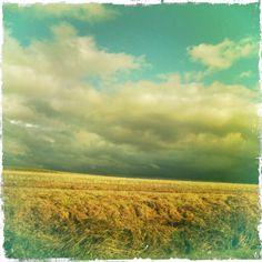 et les blés et le ciel, le mouvement