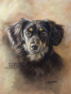TOBIASZ STEFANIAK black-dog-portrait