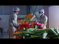 Watch how we make our Curaloe® products