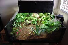 A Planted Rainforest Terrarium/Table for my Redfoot Tortoise Tortoise Terrarium, Tortoise Enclosure, Aquarium, Turtles, Decor, Google Search, Terrariums, Reptiles