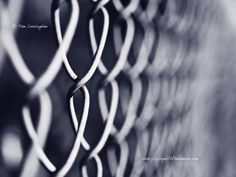 Shallow DOF: Chain Link Fence  www.playingwiththecamera.com    ©Tom Cunningham  www.facebook.com/playingwiththecamera