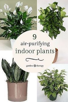 Plants produce oxygen essentially cleaning the air we breathe of airborne microbes, mold spores, and bacteria (thanks plants!). Indoor plants can also absorb contaminants like benzene and formaldehyde! Add houseplants to the home office, bathroom, bedrooms and living spaces as truly green air filtration system! #spon #ebay