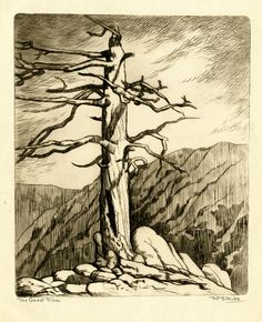 "William Seltzer Rice (1873-1963) - Ghost Pine. Drypoint Etching. America. Circa 1930-1940. 8-1/8"" x 6-5/8""."
