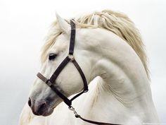 голова лошади фото: 14 тыс изображений найдено в Яндекс.Картинках