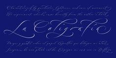Bird Script - Webfont & Desktop font « MyFonts