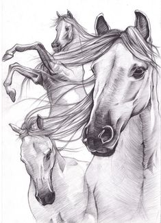 horse drawings | Sketch_works: various drawings