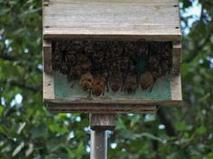 Use bat house for natural insect control. Single and multi chamber bat shelters in cypress, cedar or recycled plastic to entice the beneficial flying mammals