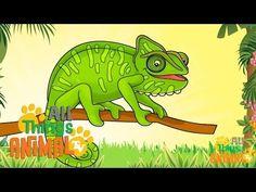 CHAMELEONS: Animals for children. Kids videos. Kindergarten | Preschool learning - YouTube