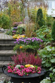 höstplantering i kruka Autumn Inspiration, Garden Inspiration, Gardening, Planting, Home Landscaping, Shade Plants, Artist Canvas, Beautiful Gardens, Flower Power