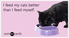 I feed my cats better than I feed myself.