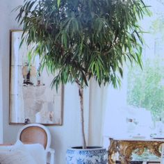 Indoor plant for living room
