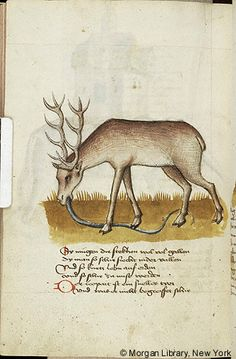 Literary, MS M.763 fol. 226v - Images from Medieval and Renaissance Manuscripts - The Morgan Library & Museum