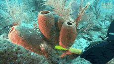 Filter Feeding Sponges Underwater
