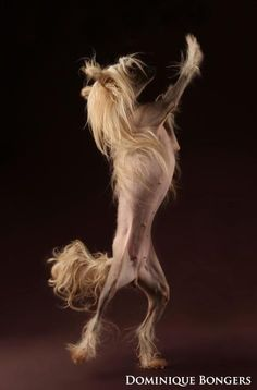 the crestie hoppy dance