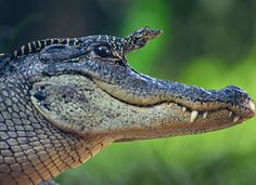 Animal Families – Tierische Familien