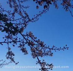 Mavi Gökyüzünün Elleri : ~ 8 ~ Çekimlerim // Mevsimi Gelmeden Çiçekleri Aça...