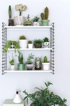 Plantitas de cactus y crasas para decorar una estantería