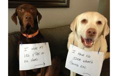 29 Hilarious Photos Of Dogs Being Shamed For Their (Adorable) Crimes (Slide #68) - Pawsome