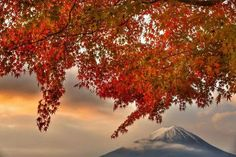 Mt.Fuji w/red leaves