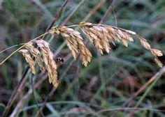 South Carolina Plants - Bing images