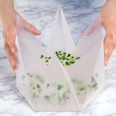 Microgarden: Tomorrow Machine developed an indoor growing kit for InFarm | urdesign magazine