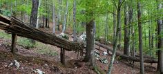 Arte Sella Tree Stump, Terrace Garden, Land Art, Armin, Landscape Architecture, Garden Design, Contemporary Art, Park, Flow