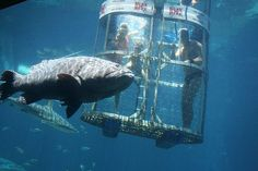 Cage Diving Diving, Sci Fi, Fish, Pets, Cage, Animals, Science Fiction, Animales, Scuba Diving