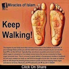 Miracles of Islam Suban'Allah Islam Hadith, Islam Muslim, Allah Islam, Islam Quran, Alhamdulillah, Prophets In Islam, Hadith Quotes, Muslim Quotes, Allah Quotes