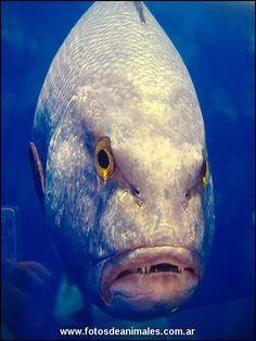 pez raro