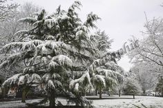 Snow scene of trees in our local park Local Parks, Snow Scenes, Trees, Projects, Outdoor, Log Projects, Outdoors, Blue Prints, Tree Structure